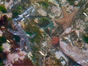 So many starfish under us as we Coast through the lagoon entrance at Turnbull Inlet