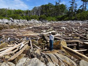 Logs piled up in the bay on Typhoon Island